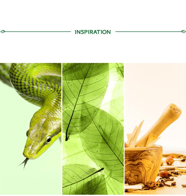 草藥品牌設計過程